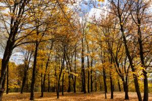 Outono e Doença Ocular
